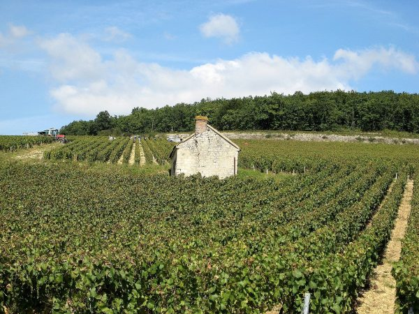secret wine tour france bourgogne chablis