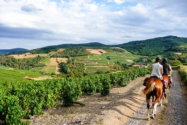 burgundy beaujolais secret wine tour horse riding