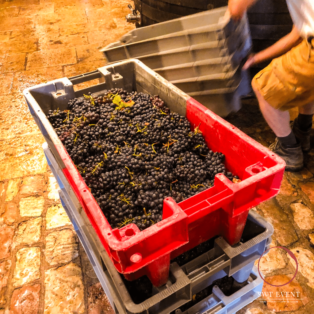 grape harvest experience France Beaune